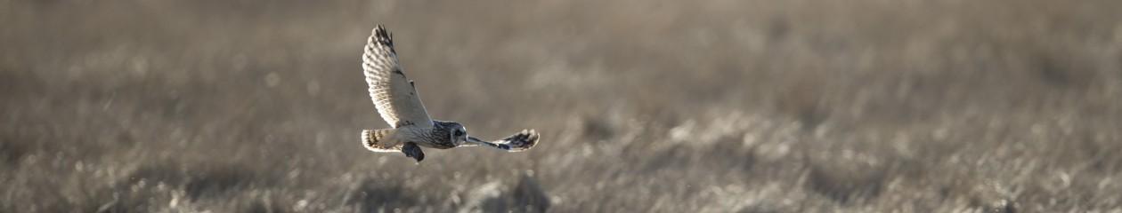 Bird Lens