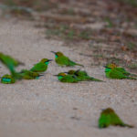 Smaragdspint
